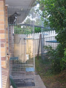 A cat run that a Northern Rivers Wildlife Carers member has installed for their own pet cats