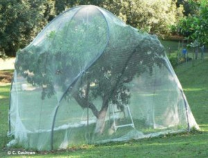 Properly Netted Fruit Tree With Polypipe Over Timber Stakes This Frame Is Also Easy To