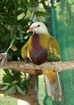 Introduction to Wildlife Rescue & Rehabilitation Training